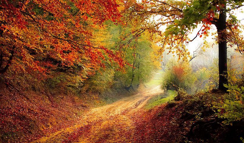 I colori ed i profumi dell'autunno per le strade della ciociaria