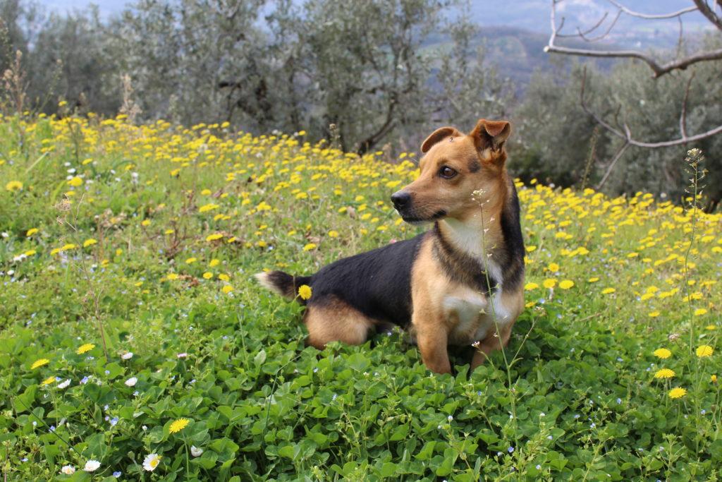 Quanto sono importanti i nostri animali domestici?